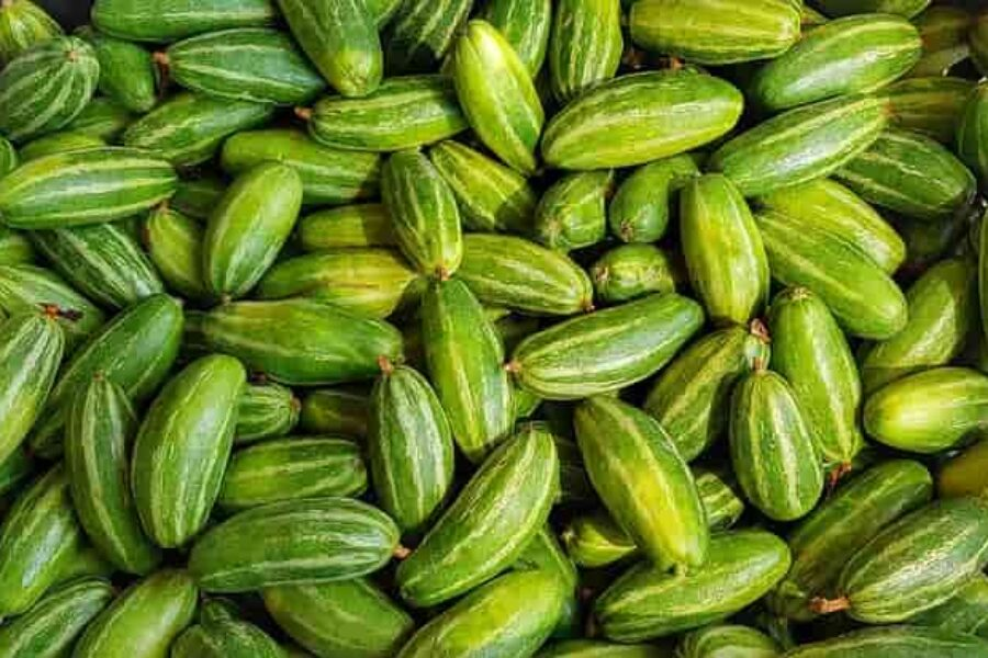 Parwal – Pointed Gourd – Benefits, Nutrition, Recipe