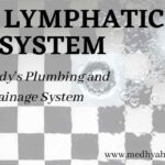 The lymphatic system-min