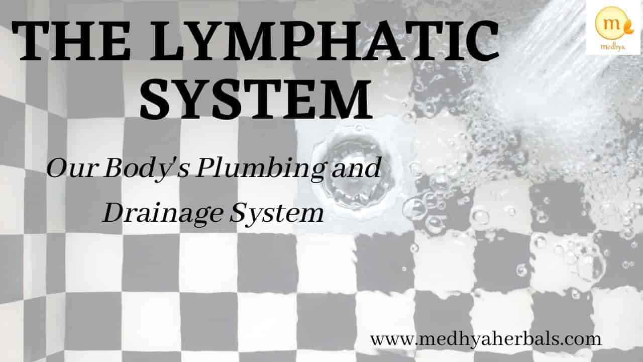 The Lymphatic System – Our Body's Plumbing and Drainage System