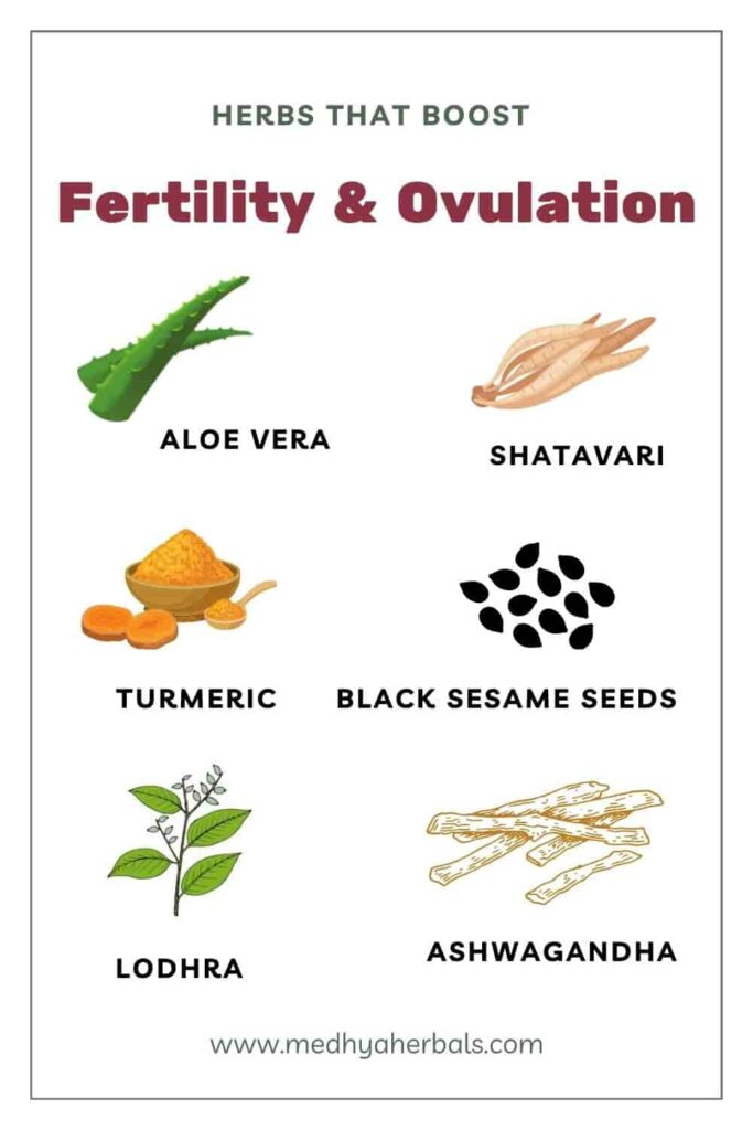 Ayurvedic Herbs for Fertility and Ovulation-min