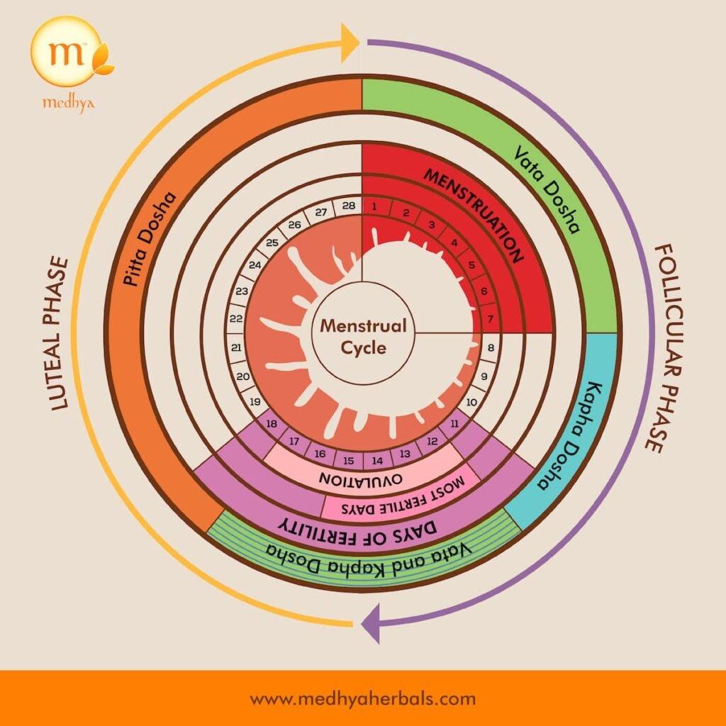 Menstrual Cycle-Irregular Periods-Ayurveda-min